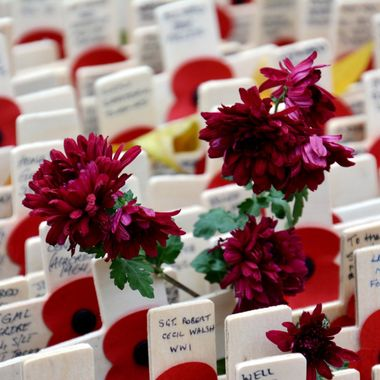 Wooden crosses planted at Westminster Abbey London in memory of those fallen in wars.