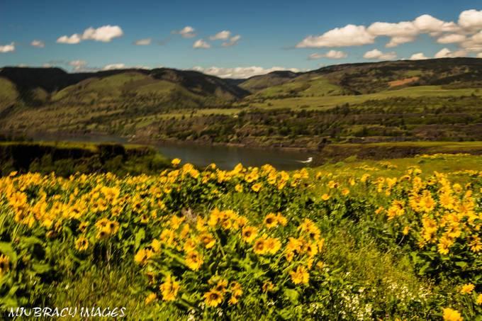 Wildflowers Rowena Crest