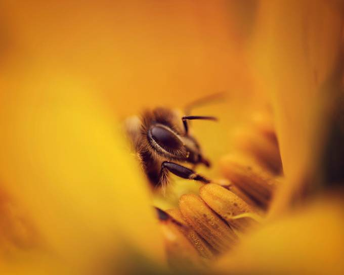 A Sea of Yellow by ericakinsella - Macro Games Photo Contest