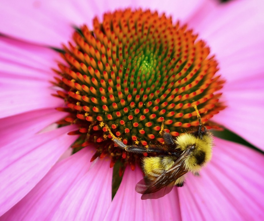 Bee 8