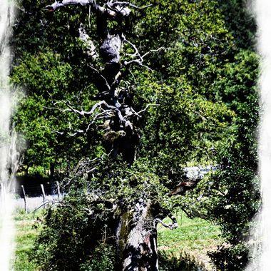 Strange old tree !