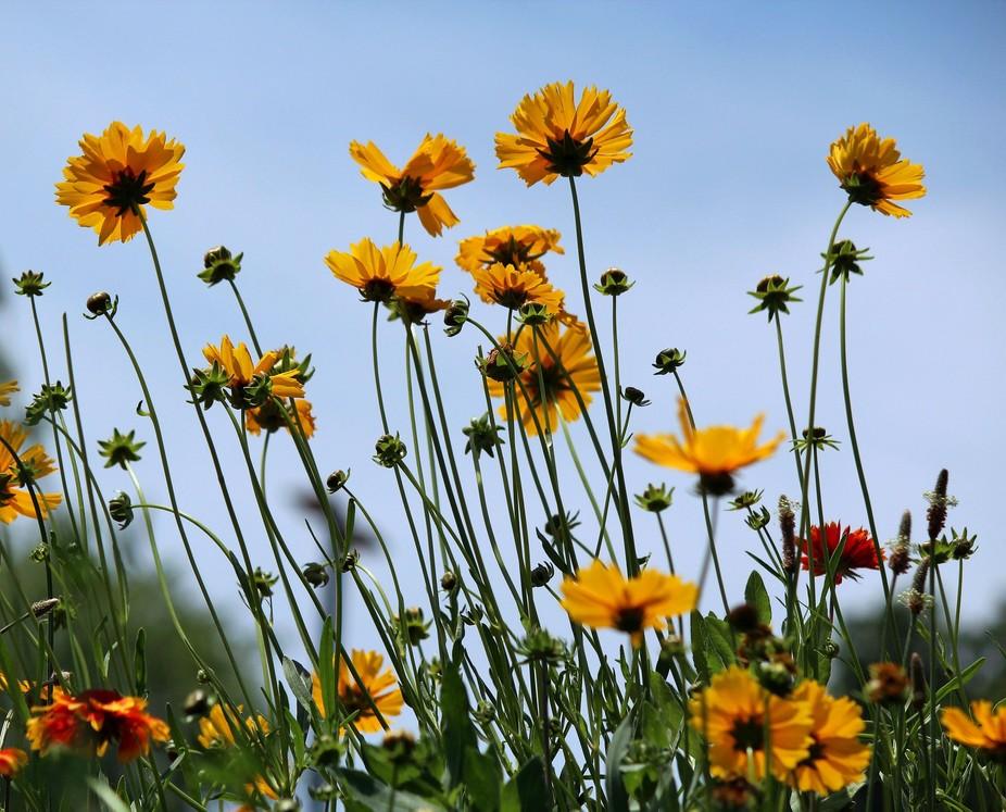 Wildflowers in Arkansas.