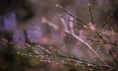 Sev.photography-The-color-pink-gives-life