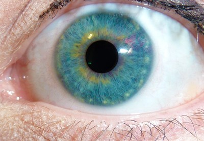 Curious eye