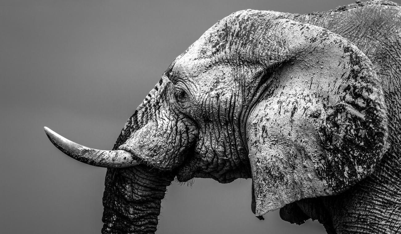 Big Mammals Photo Contest Winners