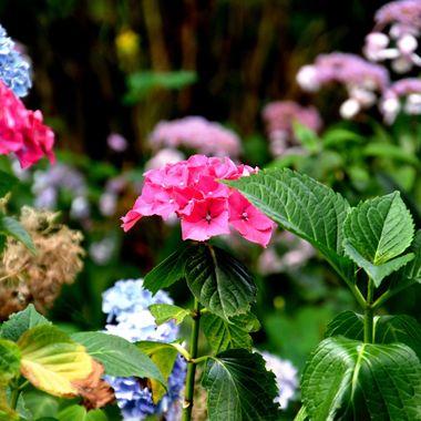 Flower at Bad Lippspringe town gardens.