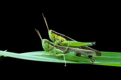 happy mating