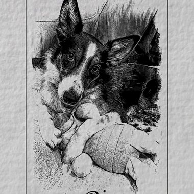 A friends dog that i manipulated the photograph of.