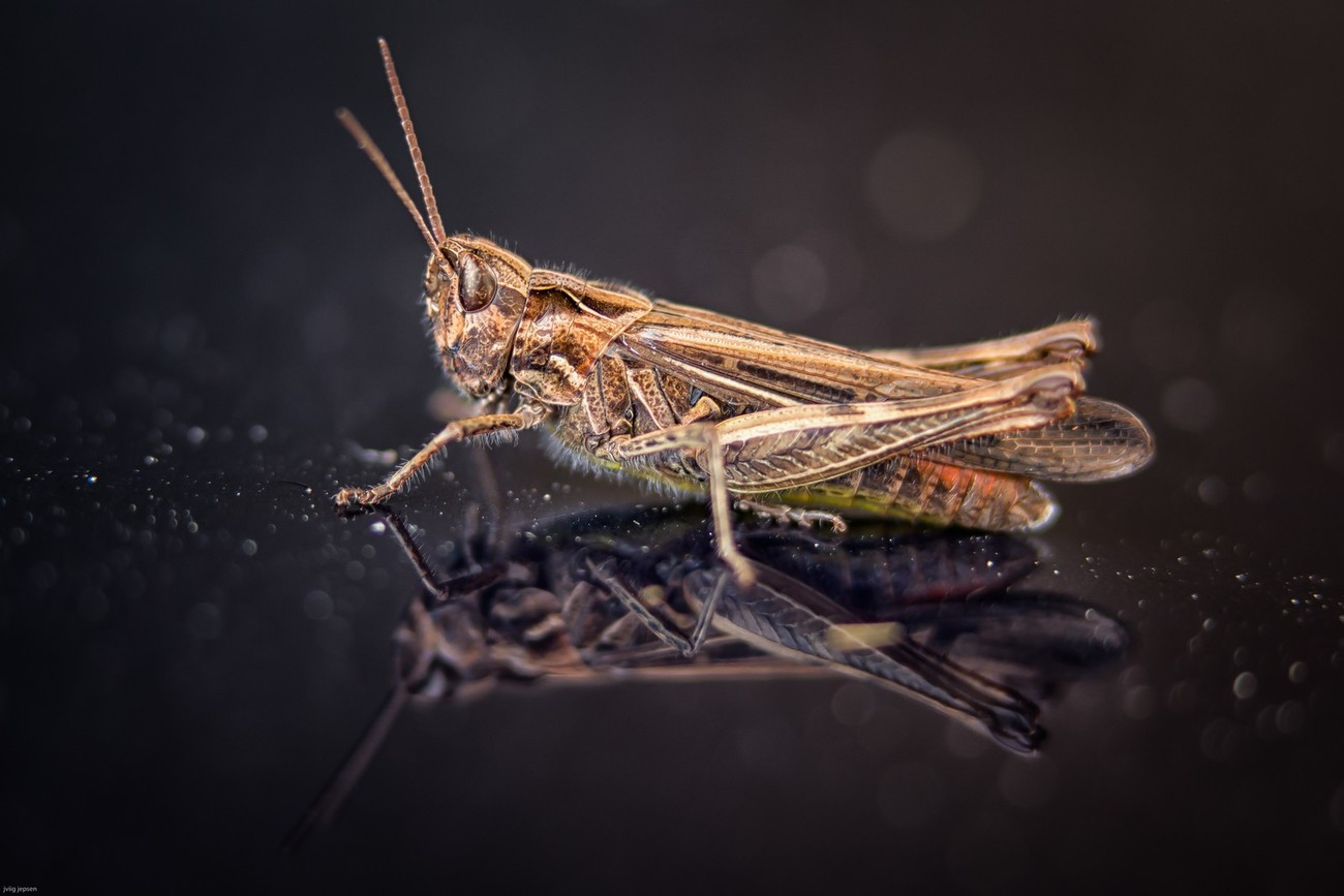 Grasshopper on the front of my car