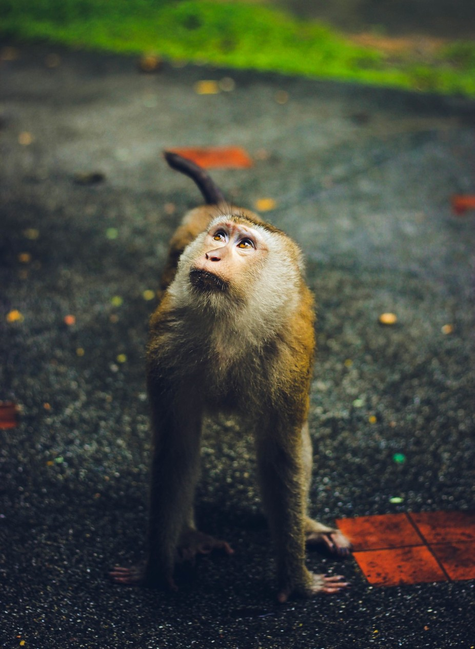 Monkey by Anastasiabob - Monkeys And Apes Photo Contest