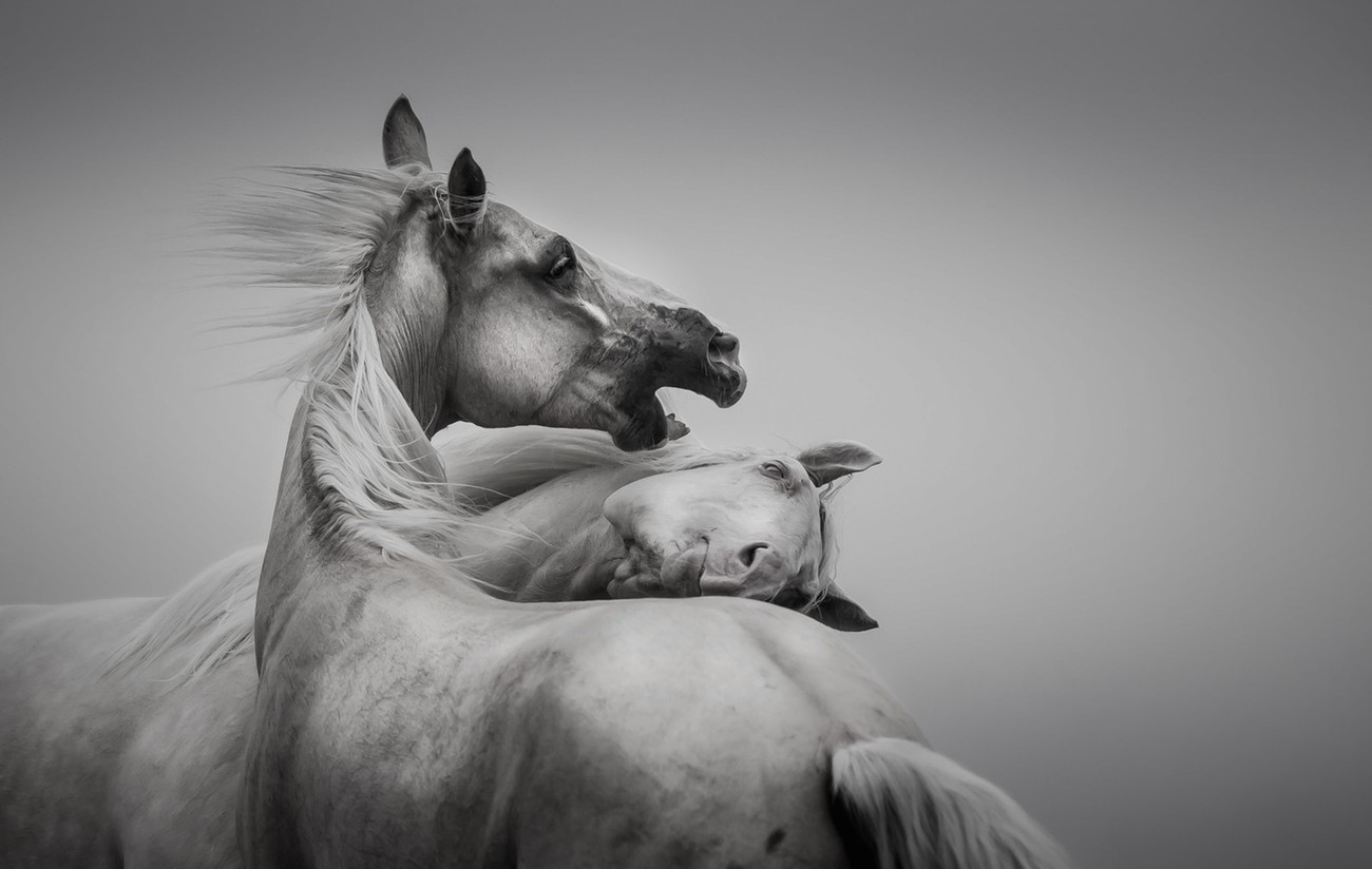 Black And White Compositions Photo Contest vol2 Winners