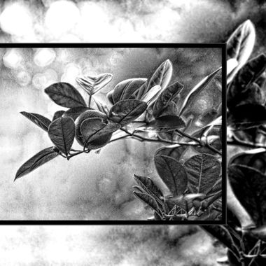 Un ripened piece of fruit on a branch in B&W