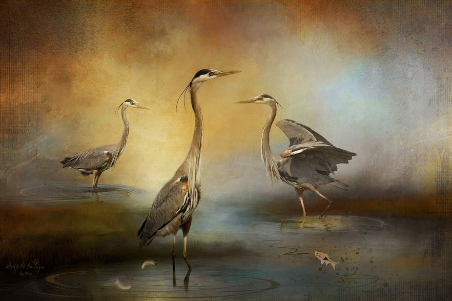 Great blue herons in the wetlands off San Francisco Bay make for great photo subjects if you can ...