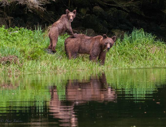 Grizzly mother and cub. Khutzemateen Grizzly Bear Sanctuary. BC by huwddu - Bears Photo Contest