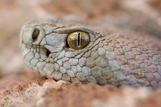 IMG_4242 by gregery - Reptiles Photo Contest