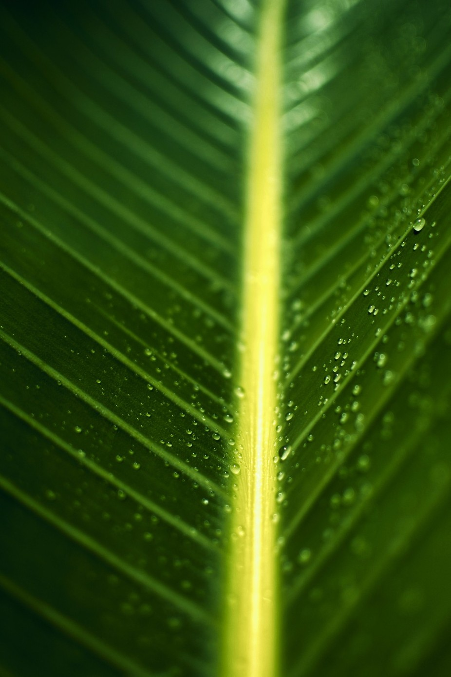 Green... by BobbyBorgia - Macro And Patterns Photo Contest