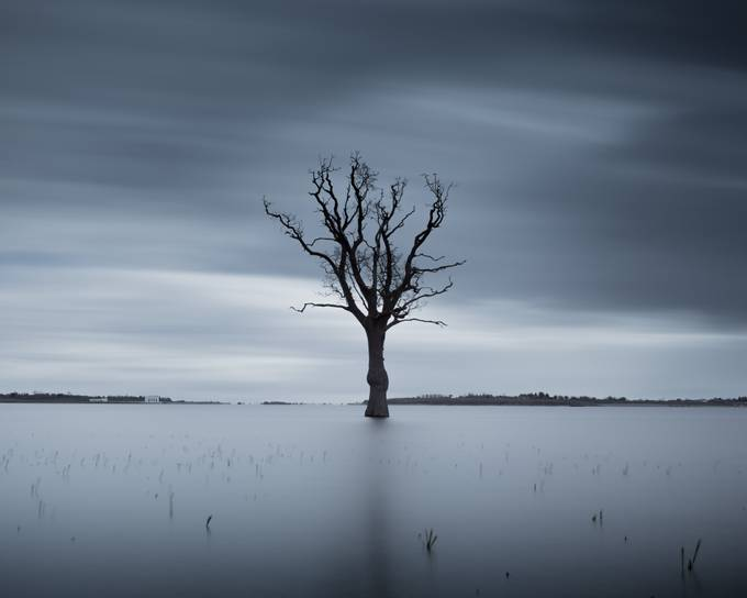 Submerged by scottbaldock - A Lonely Tree Photo Contest