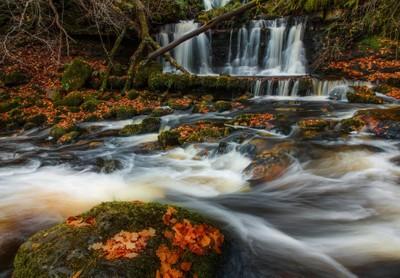 Autumn Campsie Glen