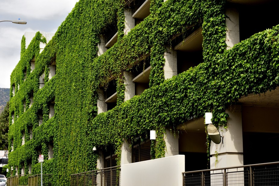 Multi Level Parking Garage with Green Vine Covering