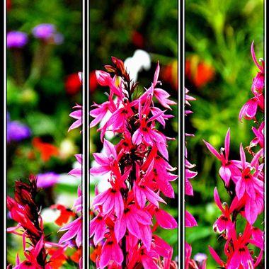 The same flower split into 3 frames.