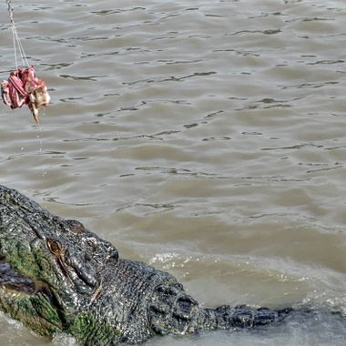 Cruise on the Adelaide River, Darwin, Home of the Jumping Crocodile