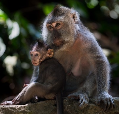 Sacred Monkey Forest (DSC08068)