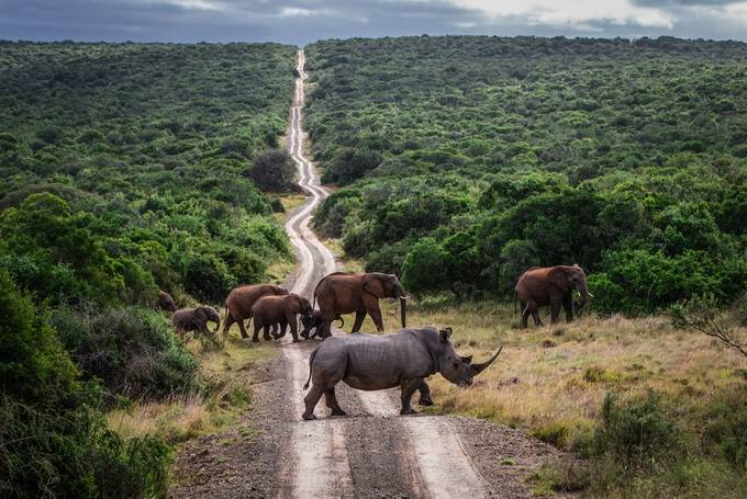 "Rhino ""Crashing"" an Elephant Party!   by WorldPix - A Road Trip Photo Contest"