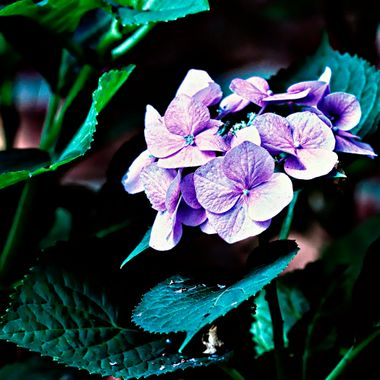 Purple flower and fly.