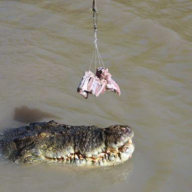 Jumping Crocodile (2) - Darwin, Australia