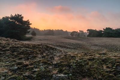 Bergerheide Sunrise