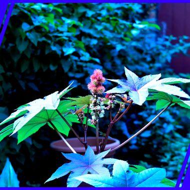 Colourful thistle plant.
