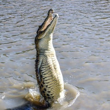 Adelaide River Jumping Crocodile Cruise