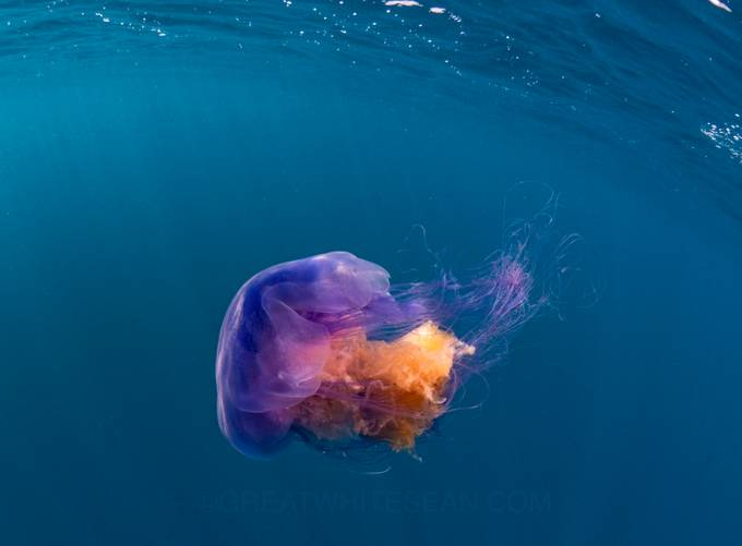 Jelly in Colour by Greatwhitesean - Bright Colors In Nature Photo Contest