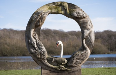 Framing a swan