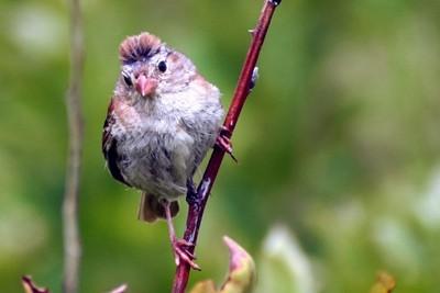 Bird in the meadows