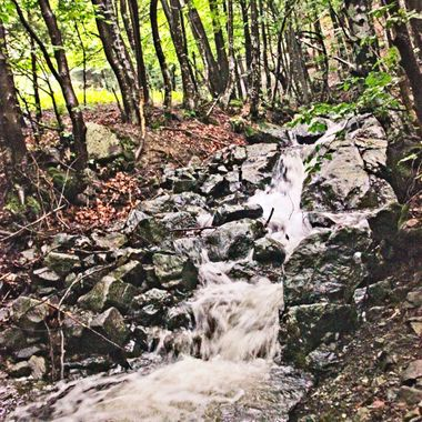 I took this photo when me and family went to the Vitosha Mountains, Bulgaria, in the year 2014. I took this photo in the forest of the Vitosha Mountains.