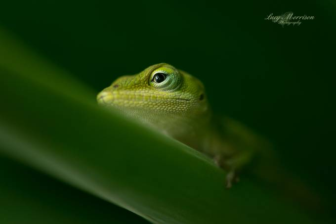 Lizard Eye by LucyCMorr - Monthly Pro Vol 35 Photo Contest