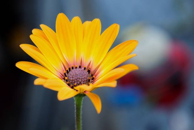 Yellow Beauty by Ela_H - Bright Colors In Nature Photo Contest