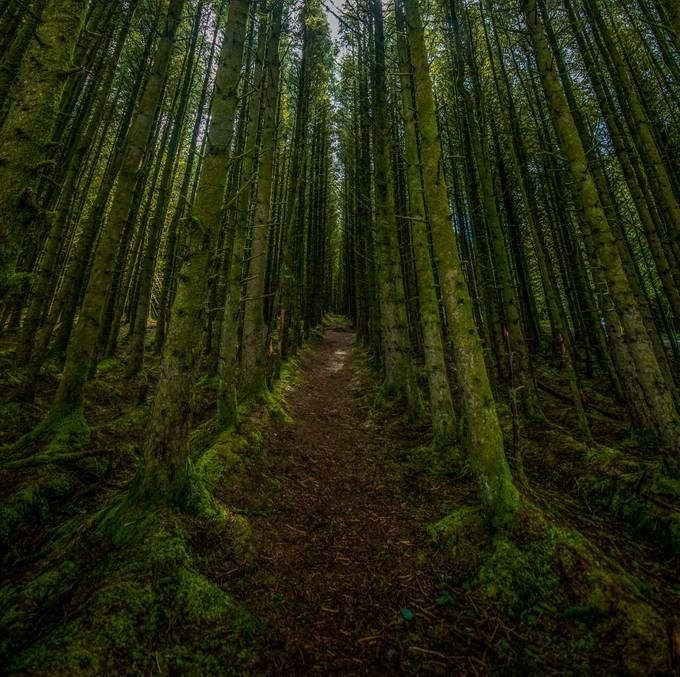 femtues4 by debbiedeboo - Tall Trees Photo Contest