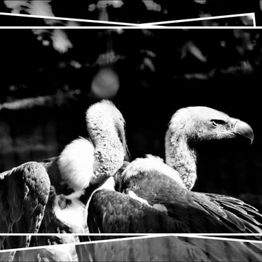 2 Vultures at Nademann's Animal Park.