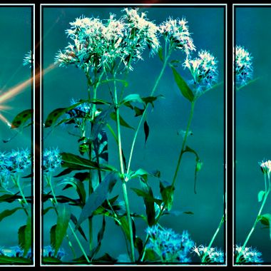 Manipulated photo in 3 different frames but together.