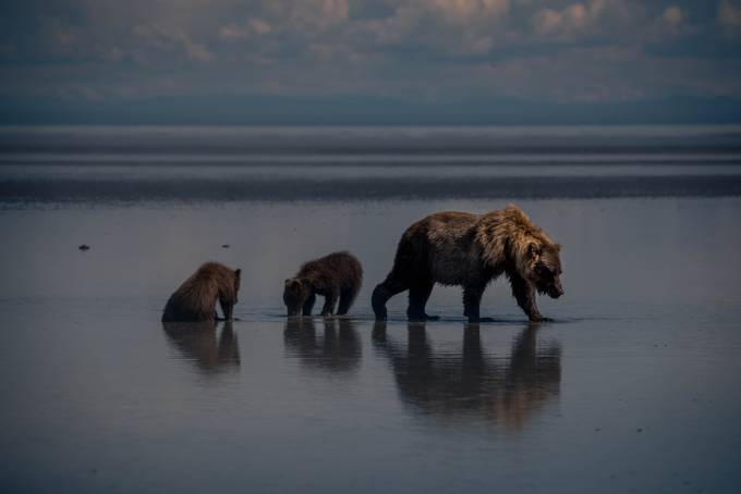 20170729-_DSC6564 by outside - Animals And Water Photo Contest