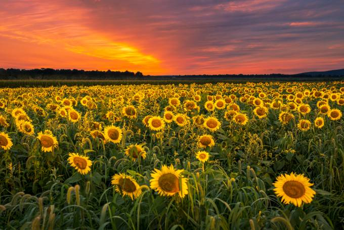 Fields of gold by jaycohen - Social Exposure Photo Contest Vol 11