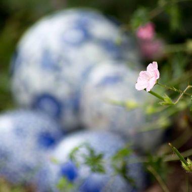 Summer 17 - Garden flower-5986