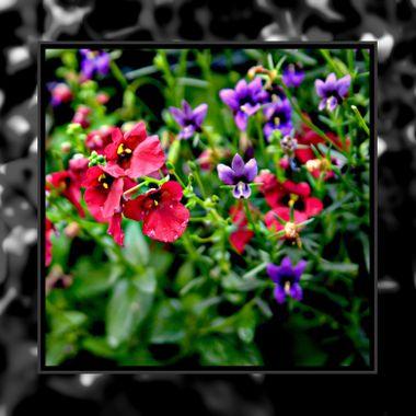 Taken in a friends garden.
