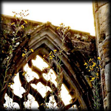 Taken at Bolton Abbey UK.