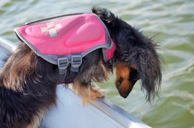 Amira watching for fish-Williams Lake