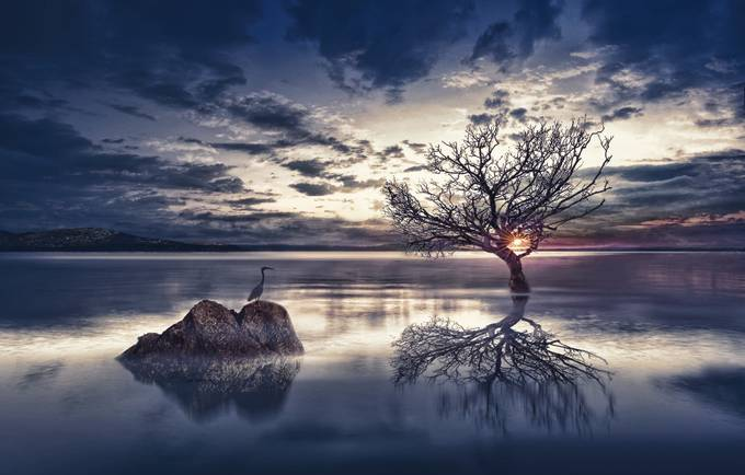 sundown by joecas - A Lonely Tree Photo Contest