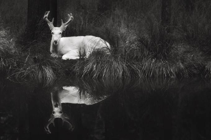 Ghostly by natosed - Animals In Black And White Photo Contest