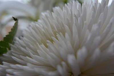 Across a flower